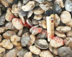 半殼雜色蛤